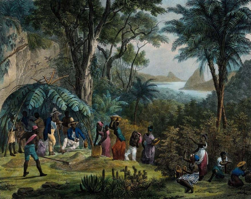 Lithograph of Indian coffee plantation, circa 1850