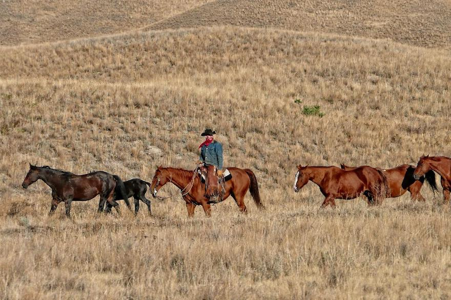 A cowboy leading horses through hills of dry grass